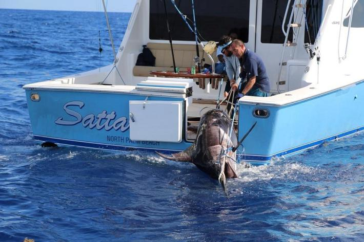 HMY clients catch a (possible) record breaking swordfish!