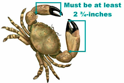 Stone Crabbing