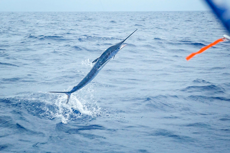 Image 2191: ABACO FISH-1
