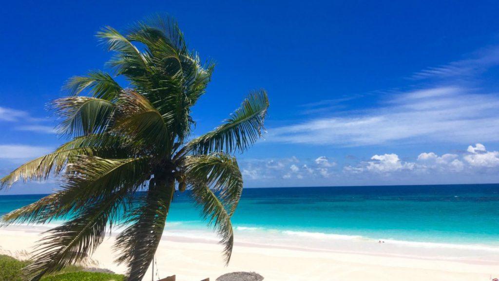 Palm tree on beach in the Bahamas
