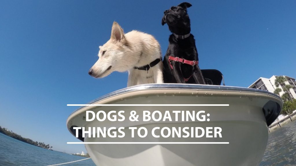 Dogs and boating