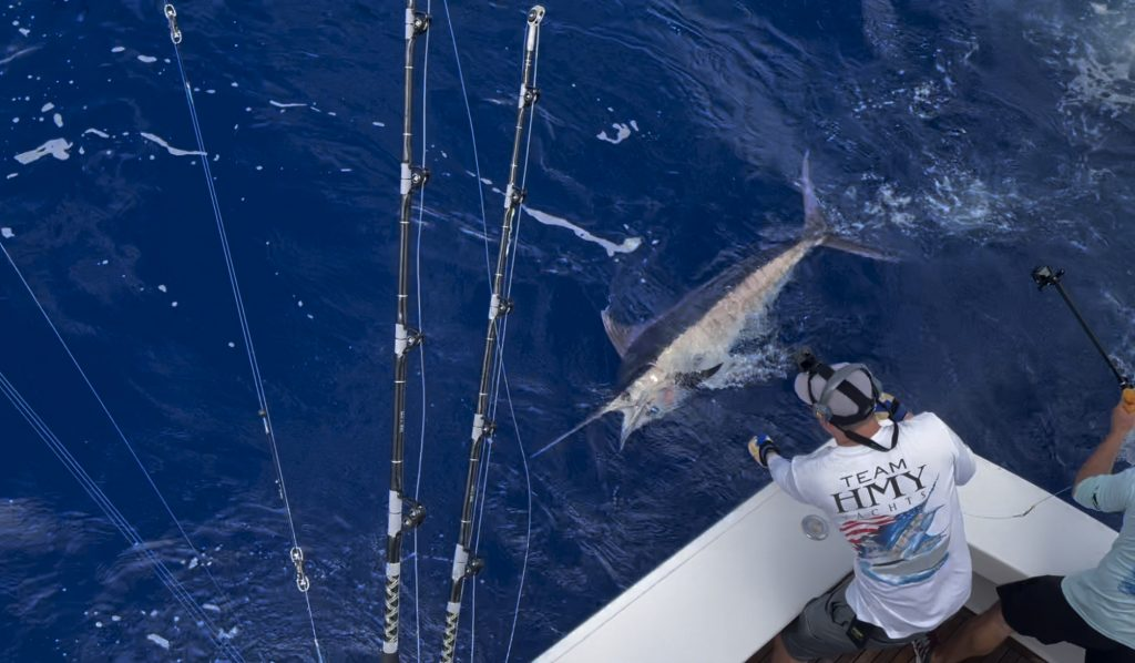 Leadering a blue marlin
